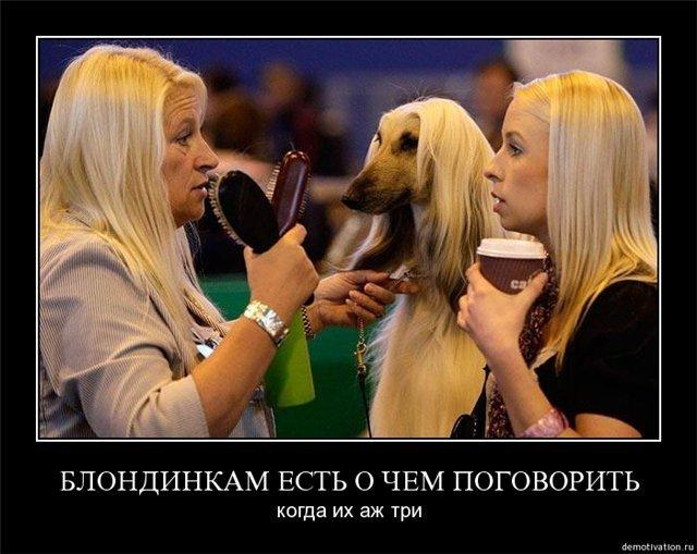 Человеческая фотографии глупых блондинок