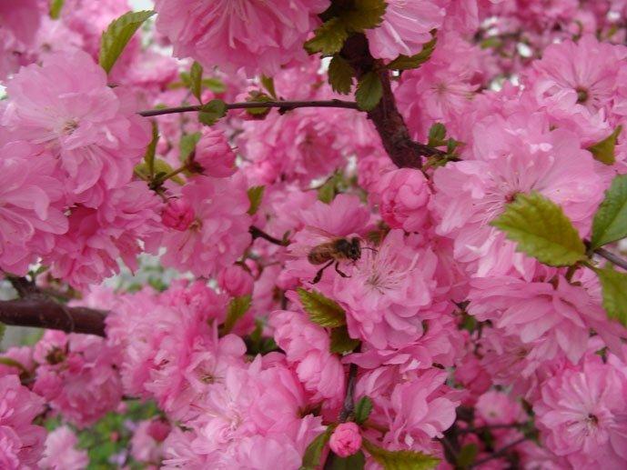 Цветы розового цвета с фото и названиями