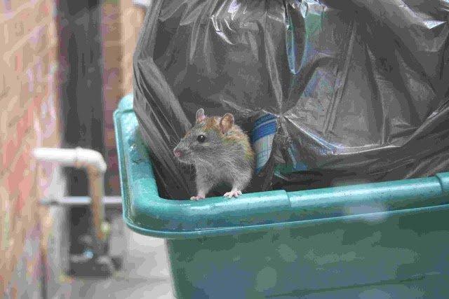 проводятся лениндград элеватор крысы кошки сравнительно молодой