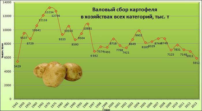 Виды картофеля выращенного в чувашской республике курсовая работа виды картофеля выращенного в чувашской республике курсовая работа