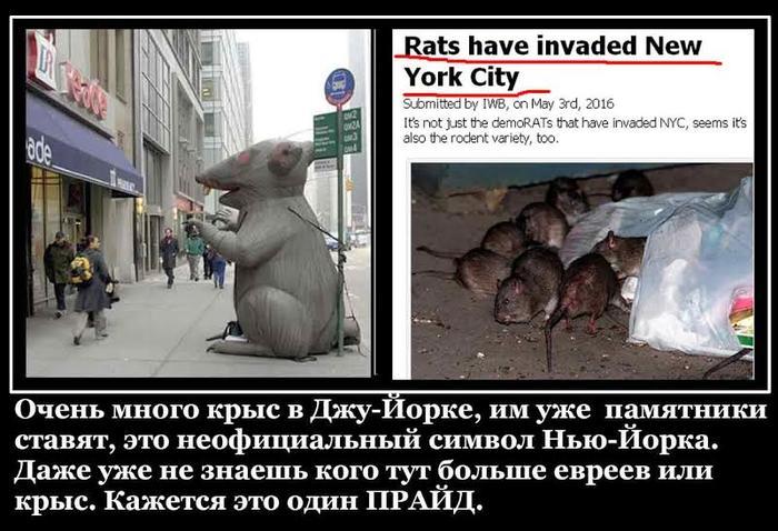 NY и крысы.jpg