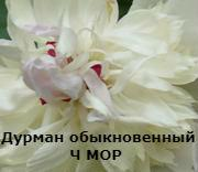 675252fd9923bcadeb25f40199887a58.jpg