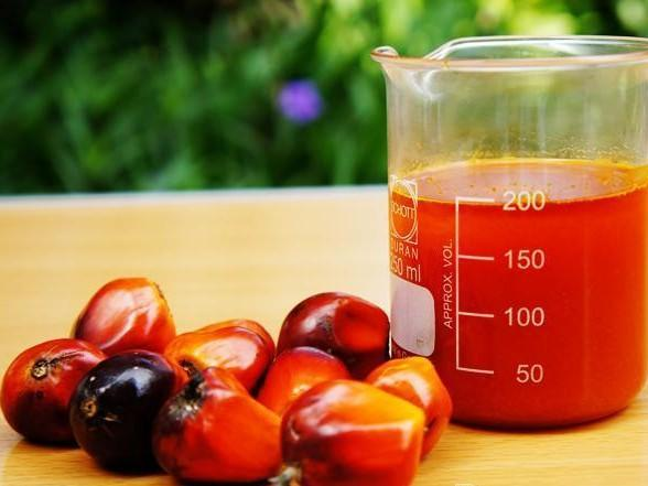 crude_palm_oil-1-588x441