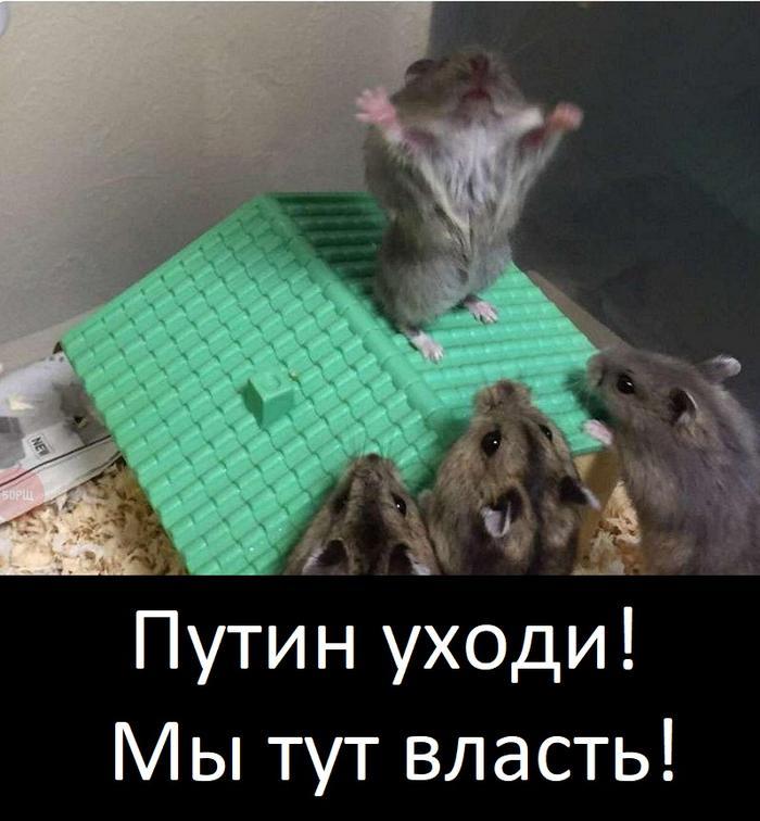 Навальнер и хомячки.jpg
