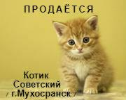 d6225a842e29aab1bdd755663f8e193c.jpg