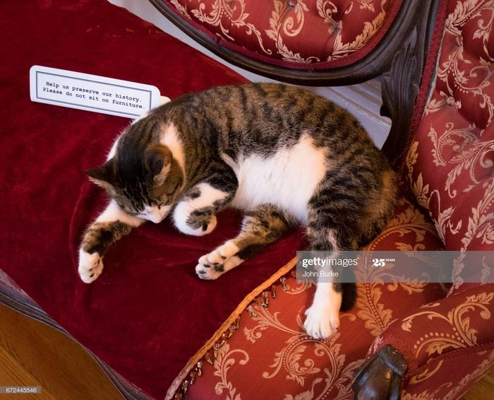 Hemingway House cats in Key West : Stock Photo
