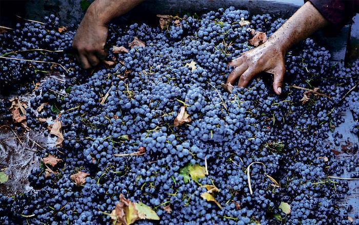 Оценка доли «технологической» воды, которая может попасть в вино, разнится от 2,8% до 7%.