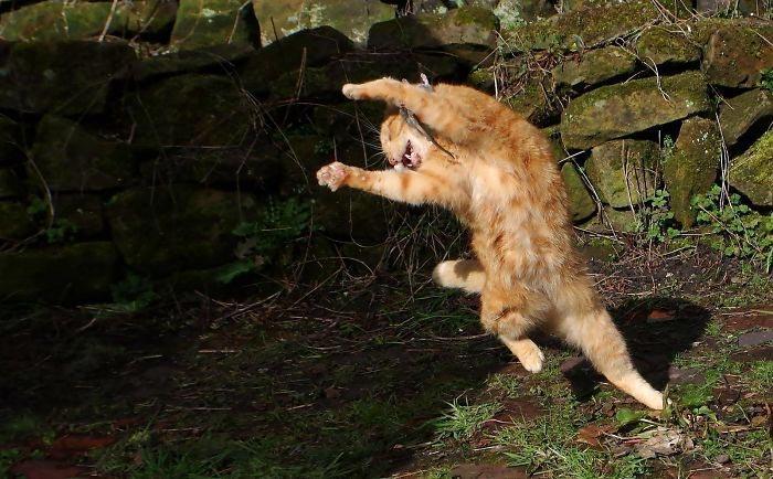 танцующие коты, кошки умеют танцевать