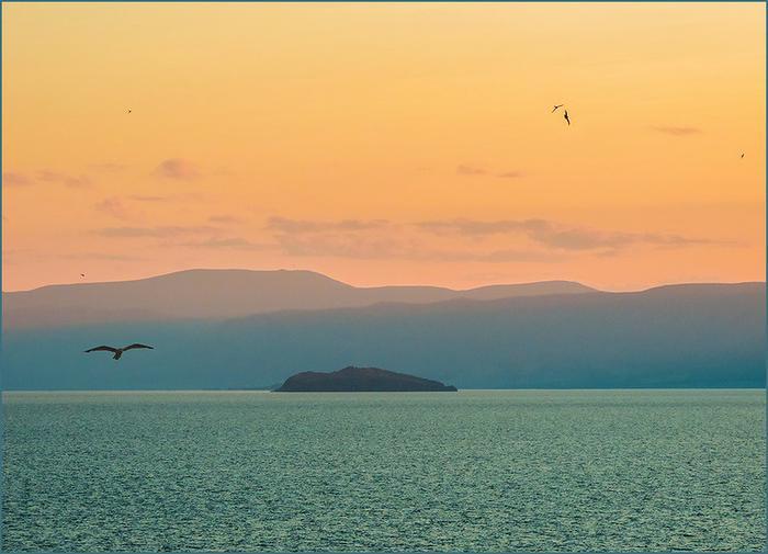 Чайки над Байкалом