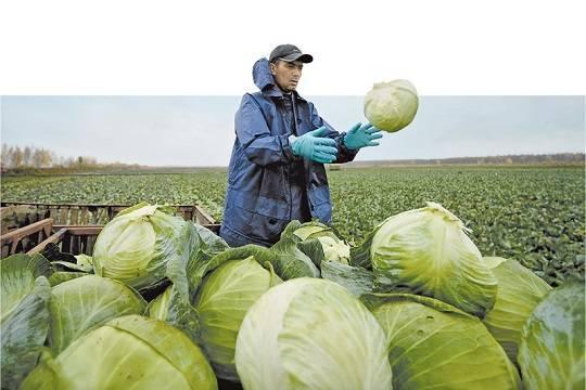 На подорожании овощей разом наживаются олигархи, чиновники и криминал (фото: Константин Чалабов/РИА Новости)