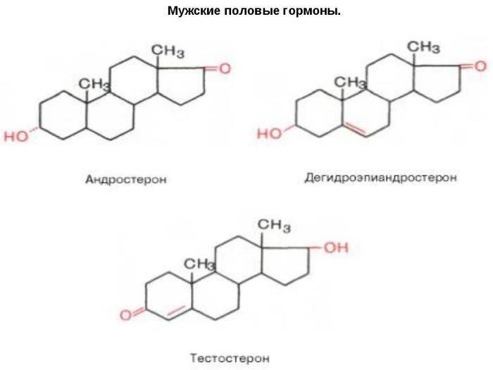 gormon-virabativayushiysya-pri-sekse