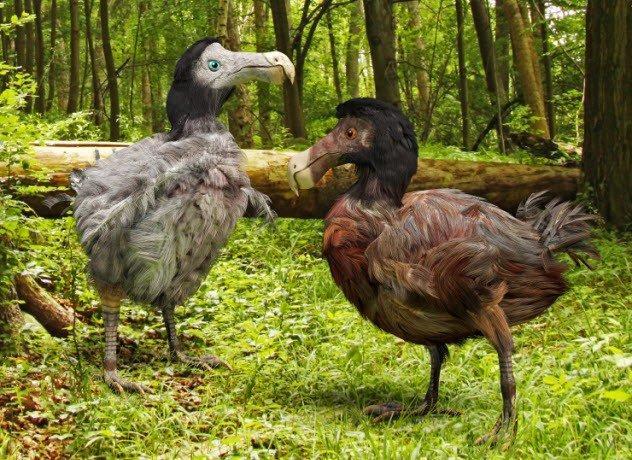 Тайны животных, которые, наконец, могут быть разгаданы