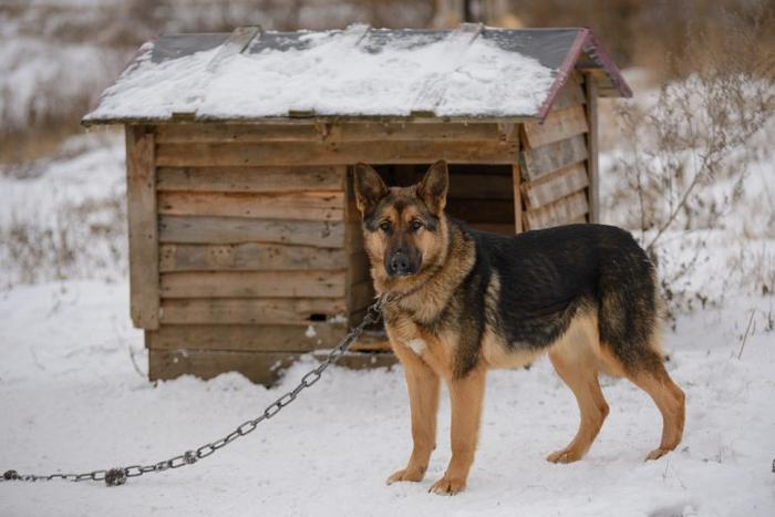 Картинки по запросу пес на привязи фото