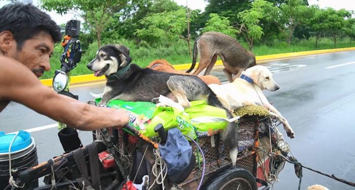 Мужчина странствует по Мексике с тележкой, спасая раненых и больных собак