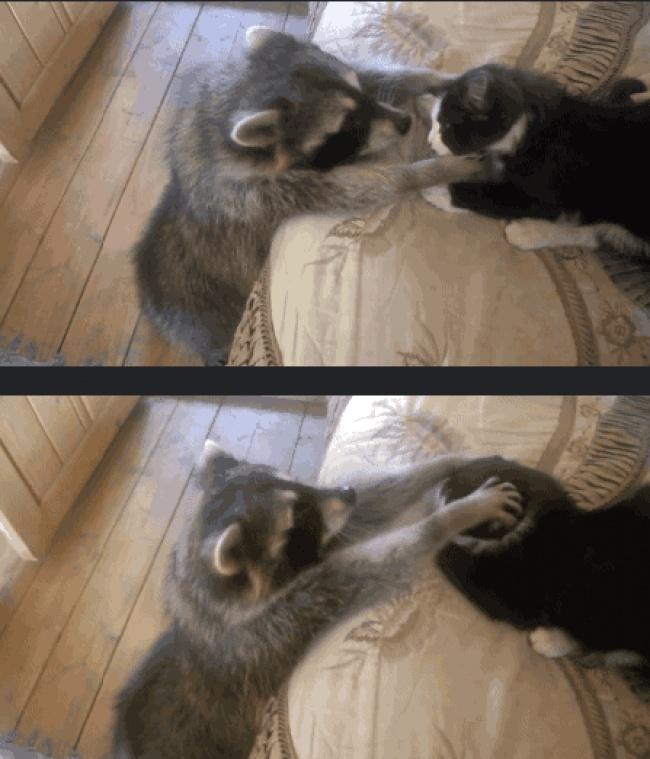 Фото животных, которые ни за что не отдадут своё