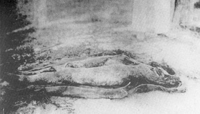 Станция Снегиревка, под Харьковом. Труп замученной женщины. На теле не было найдено одежды. Голова и плечи были отрублены (при вскрытии могилы найдены так и не были).