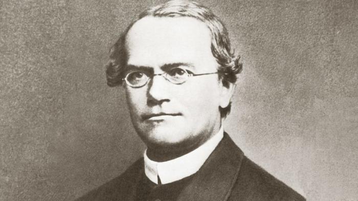 Грегор Иоганн Мендель вклад в науку, дилетант, дилетанты, наука, учёные