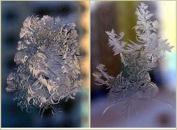 Фото кристаллов льда в виде листа