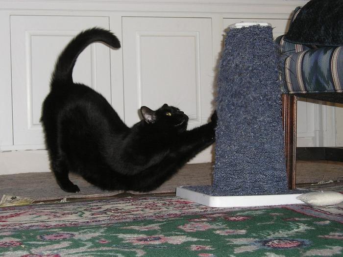 кот царапает диван что делать