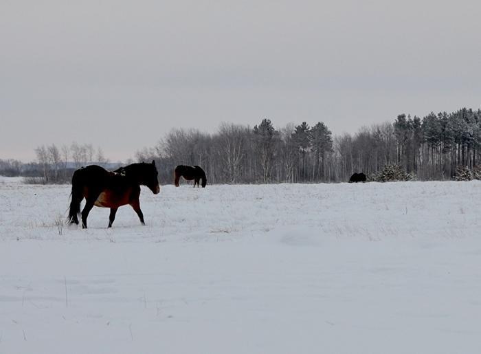 Когда-то была идея разводить здесь лошадей, теперь табун на вольном выпасе