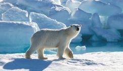 Русский Север просит льда