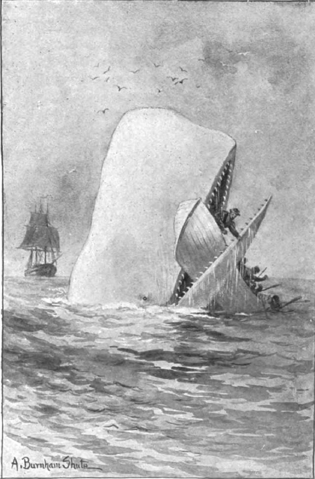 a literary analysis of the great white whale in moby dick by herman melville Essay a critical analysis of herman melville's moby dick moby dick is biographic of hunt down a white whale named moby dick continually expecting a great.