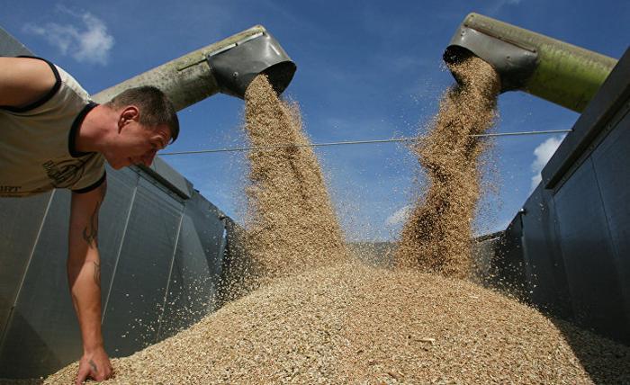 """Уборка пшеницы на полях сельхозпредприятия """"Долгов и компания"""""""