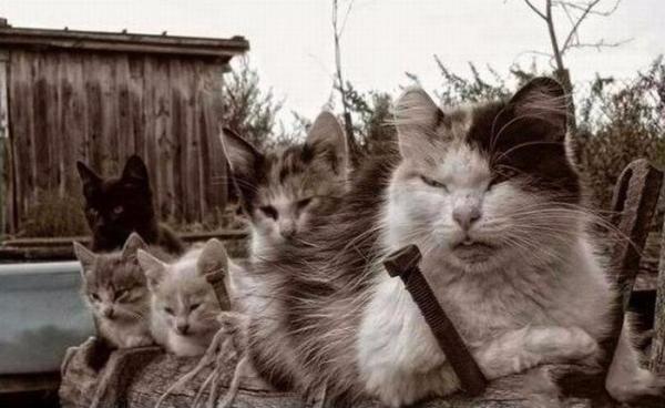 Картинки по запросу Реальные коты: смешные фотографии дворовых кошачьих банд