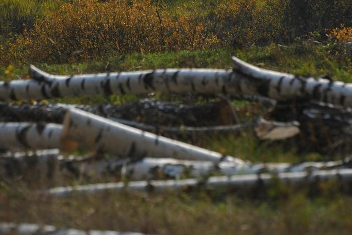 Вопрос с рубкой деревьев регулируется разными документами