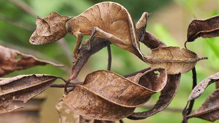 Замаскировавшаяся ящерица без фотошопа, природа, удивительные фото, человек