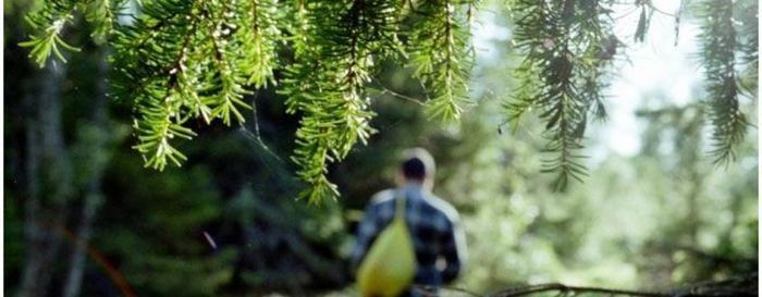 Что делать, если заблудились в лесу?