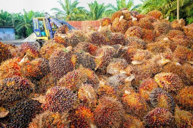 Пальмовое масло выросло в цене на 120 % и продолжает дорожать