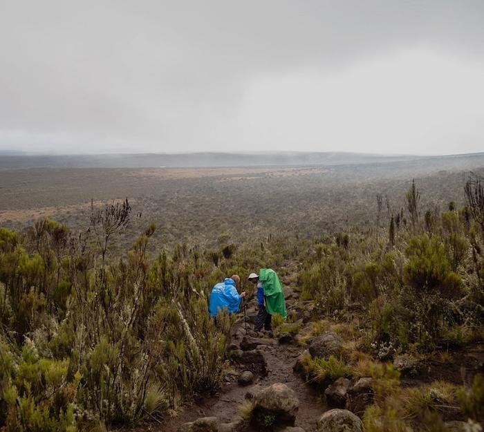 Флора Килиманджар
