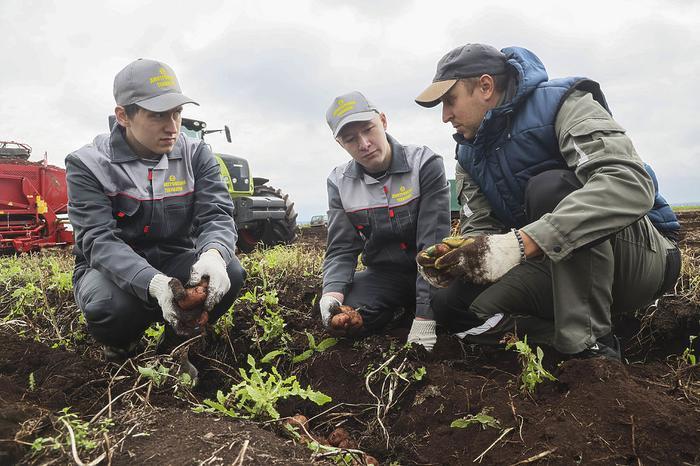 """Студентов вывезли """"на картошку"""": будущих аграриев научили собирать урожай"""
