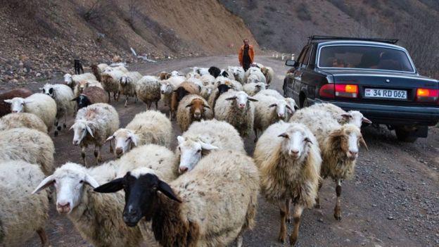 Пастух с овцами в горах Сюника