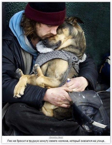 Почему у собак золотые сердца?