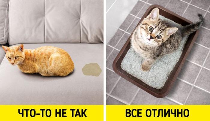 8 признаков, по которым легко определить, что ваш кот — самое счастливое создание на земле