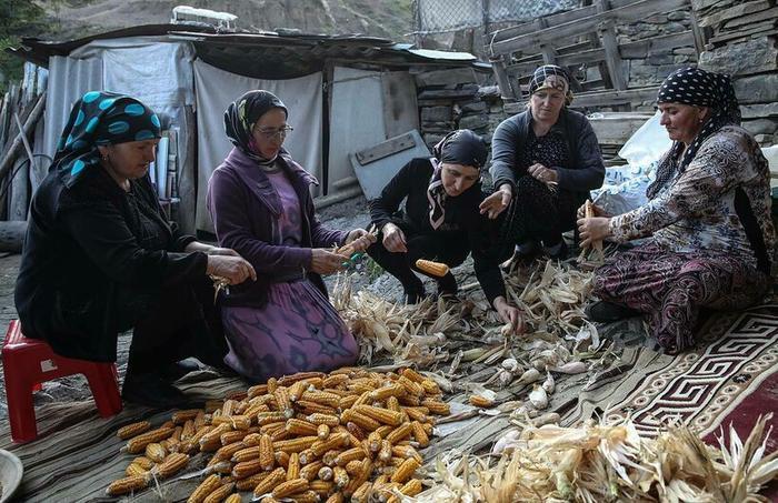 Чамалалы занимаются сбором урожая