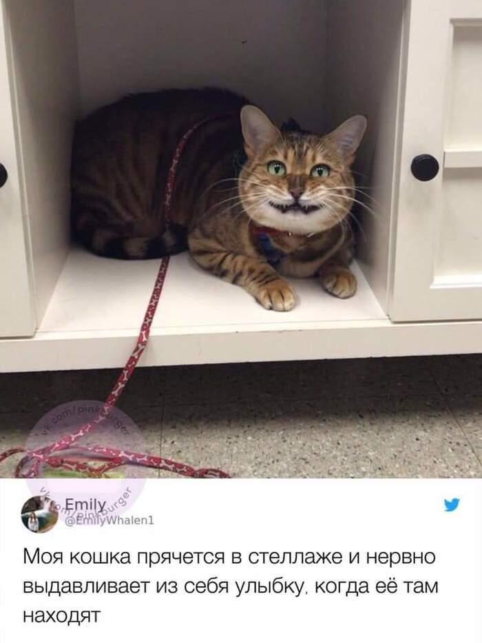 У ветеринара Кот, Ветеринар, Страх, Длиннопост
