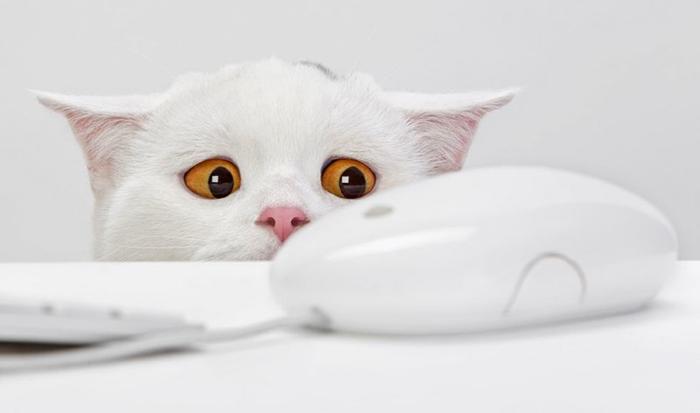 ДИКИЕ КОРНИ домашние питомцы, кошки, познаватальное