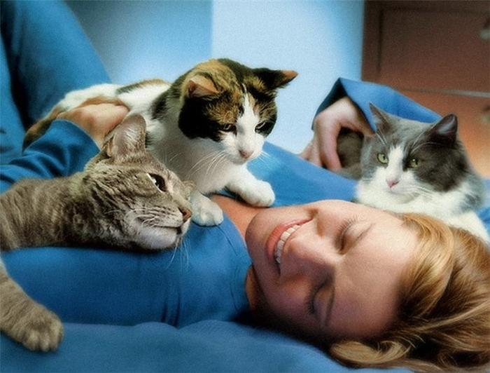 ДОВЕРИЕ К ХОЗЯИНУ домашние питомцы, кошки, познаватальное
