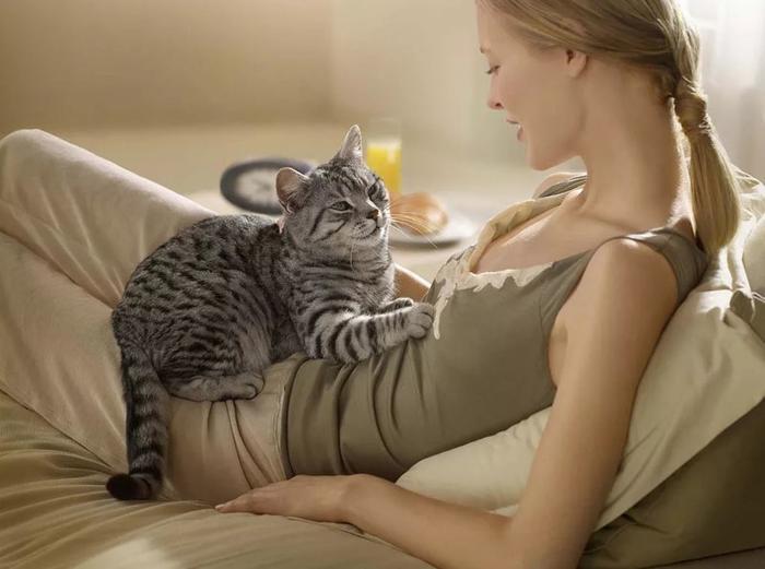 КАК РЕАГИРОВАТЬ НА КОШАЧЬИ ЛАСКИ? домашние питомцы, кошки, познаватальное