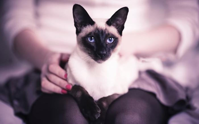 БИОЛОГИЧЕСКОЕ ОБЪЯСНЕНИЕ домашние питомцы, кошки, познаватальное