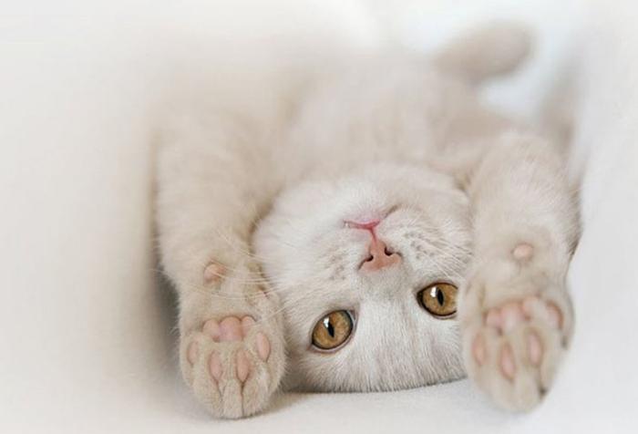 ВЕРСИЯ ОТ НАРОДНЫХ ЦЕЛИТЕЛЕЙ домашние питомцы, кошки, познаватальное