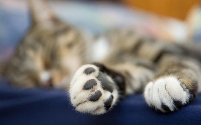 «ЭНДОРФИНОВЫЕ НАРКОМАНЫ» домашние питомцы, кошки, познаватальное