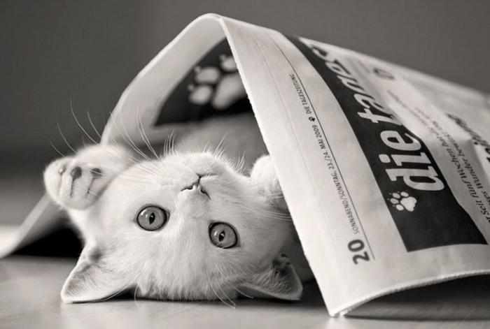 Почему кошка топчет Вас лапками домашние питомцы, кошки, познаватальное