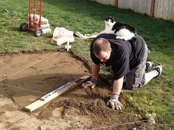 20 кошек, которые плевать хотели на твоё личное пространство коты, кошки, приколы, смешно