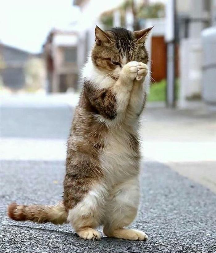 дочки фото как котик извиняется учесть при заказе
