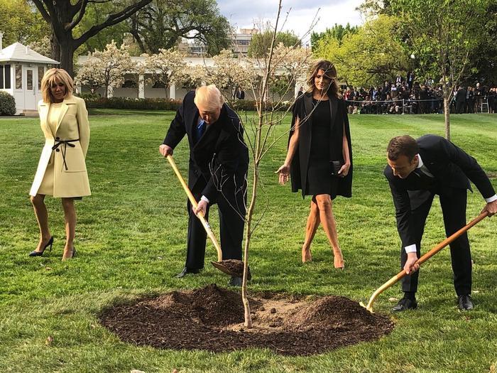 Перхоть Макрона и дерево Трампа