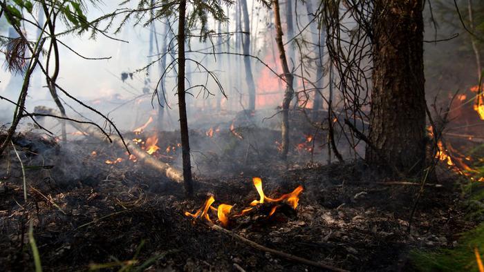Площадь лесных пожаров в России за сутки выросла почти в 3 раза
